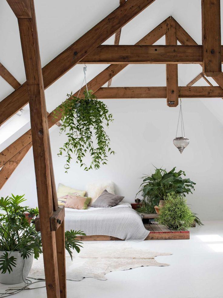 Không nên bài trí quá nhiều thực vật trong phòng ngủ