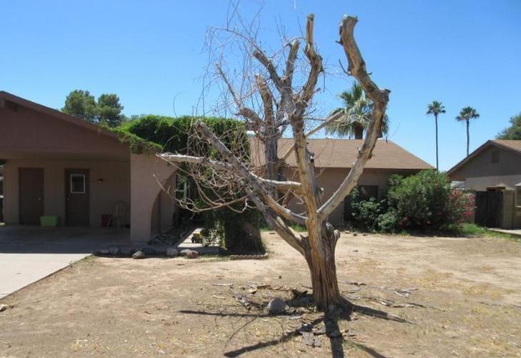 Hình thế nhà đẹp không nên có cây khô trước cửa