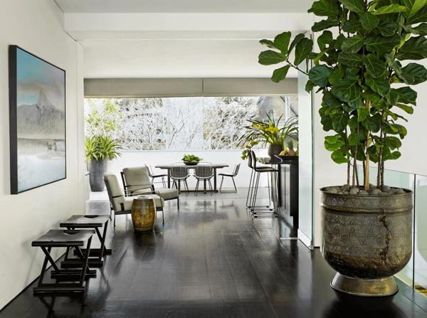 Nên chọn những cây lá có hình tròn để trưng bày trong nhà (Ảnh minh họa: Baomoi)