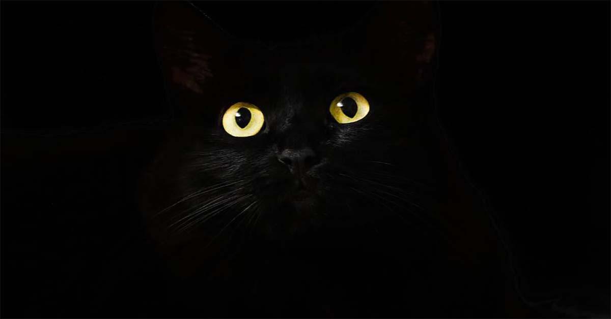 Nuôi mèo trong nhà có tốt không hay khiến gia vận nghèo đi?