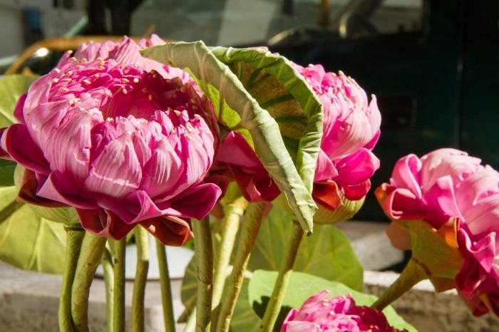 nhung loai hoa khong nen trong trong nha vi bat cu li do gi 4
